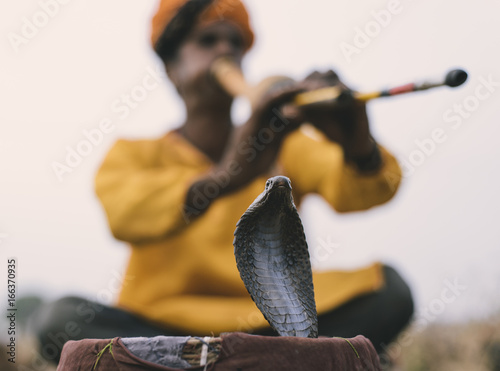 Stampa su Tela Snake Charming With An Indian Cobra