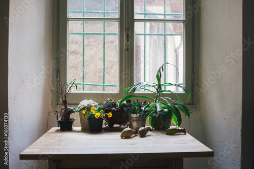 Plants On A Wooden Table