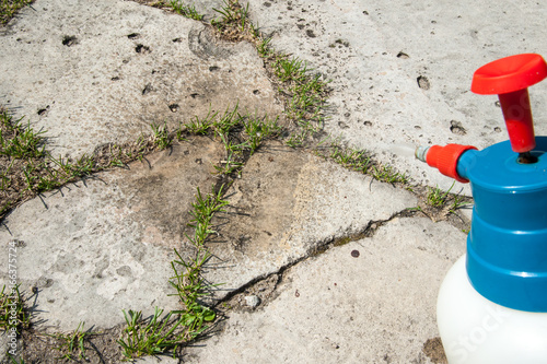 Fotografia, Obraz  cutting out weeds / Man removes weeds from the lawn