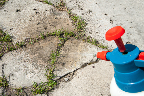 Foto  cutting out weeds / Man removes weeds from the lawn