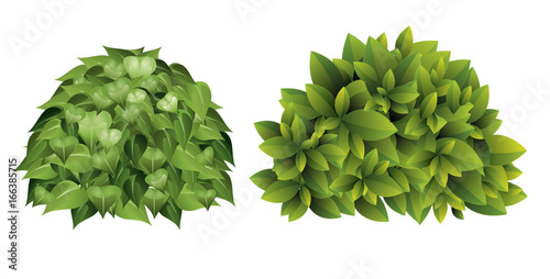 Photo Vector illustration of garden bush with green leaves in cartoon style