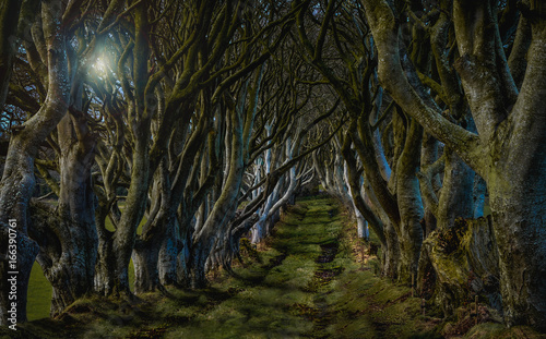 "Fotografie, Obraz  ""The Kingsroad"" from Game of Thrones"
