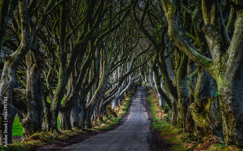 Photo  a tree lined road called The Dark Hedges in Northern Ireland