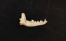 A Jaw Bone Laying On A Piece Of Stone.
