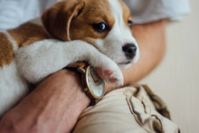 Cute Puppy Laying On The Hand