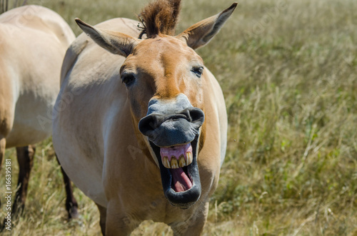 Someone made the horse laugh Canvas Print