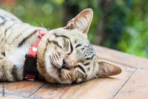 Deurstickers Franse bulldog Cute cats are sleeping comfortably. Cat in Thailand.