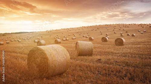 Obraz na plátně Straw bales are the beautiful scenery