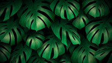 Feuilles Tropicales Vectoriell...