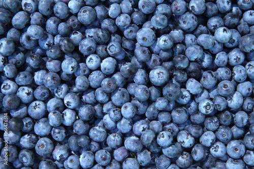 Fototapety, obrazy: Blueberries background