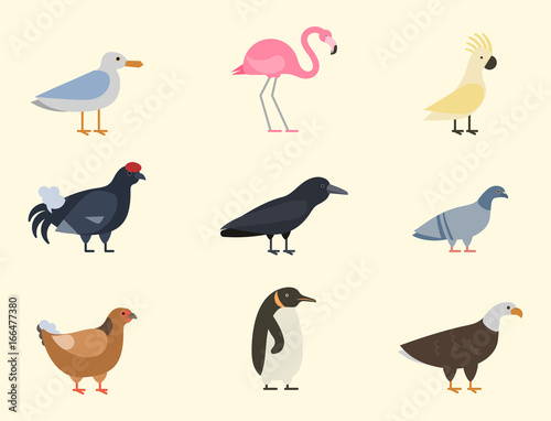 Bird species collection different vector illustration wild animal characters avi Canvas Print