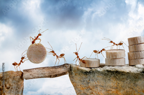 Ants carrying wood crossing cliff, teamwork concept Canvas Print