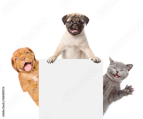 Cat And Dogs Peeking Above White Banner Isolated On White Background Buy This Stock Photo And Explore Similar Images At Adobe Stock Adobe Stock