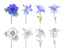 Columbine, Aquilegia, Anemone Flowers. Set Of Colored And Outline Flowers.Stock Line Vector Illustration.