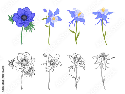 Canvas-taulu Columbine, aquilegia, anemone flowers