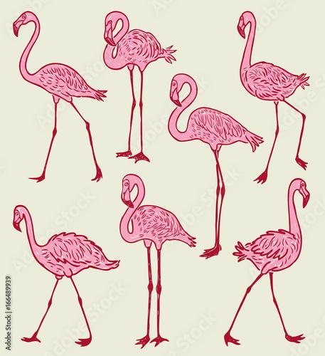 Canvas Prints Flamingo Bird A flock of the pink cartoon flamingos