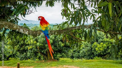 Foto op Canvas Papegaai parrot