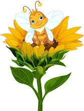 Queen Bee On Sunflower