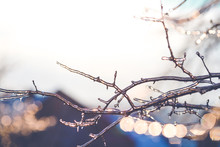 Beautiful Winter Photo With Branches Covered With Ice