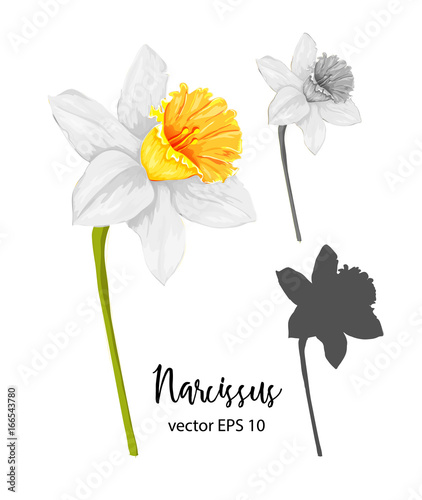 vector realistic daffodil narcissus set isolated Wallpaper Mural