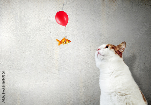 Fotomural Your lovely pet