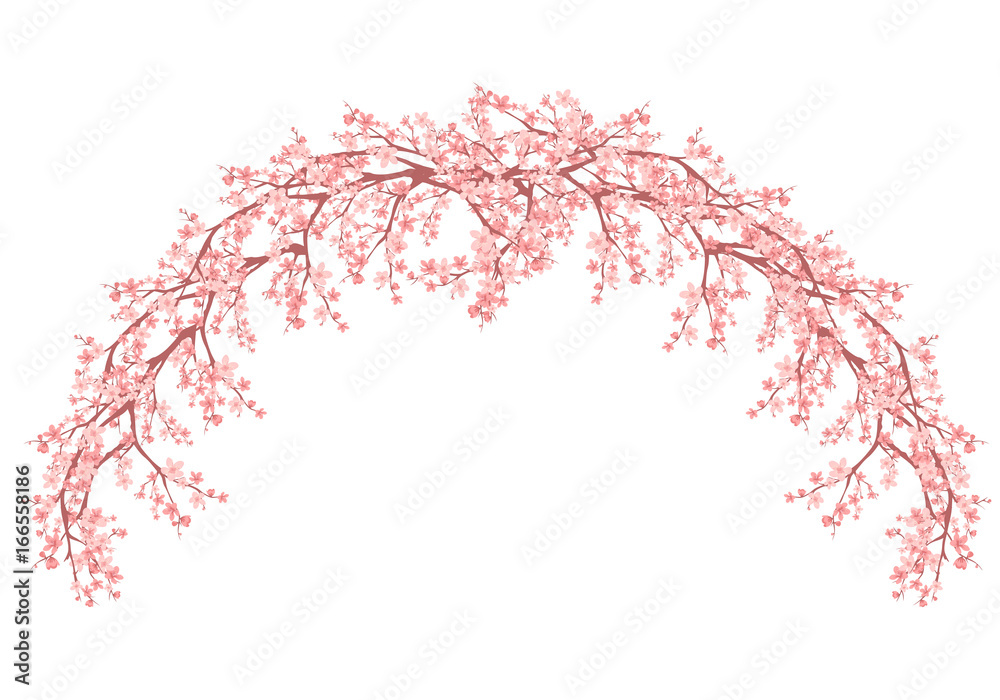 Fototapety, obrazy: floral arch made of blooming sakura branches - spring season vector design