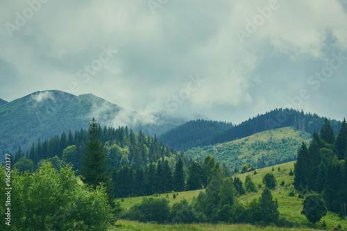 Foto auf Gartenposter Hugel Forest in the mountains