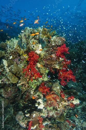Staande foto Koraalriffen School of sea goldie and dwarf sweeper swim over the coral garden