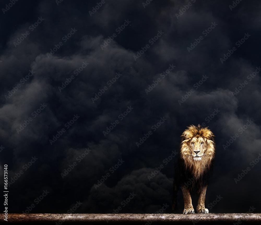 Fototapeta Portrait of a Beautiful lion, lion in the dark smoke