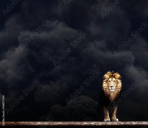 Recess Fitting Lion Portrait of a Beautiful lion, lion in the dark smoke