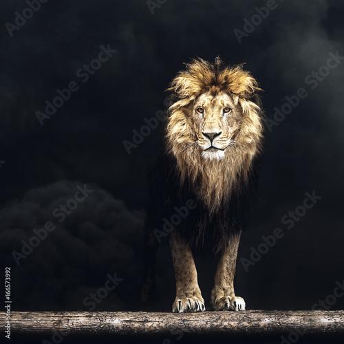 Zdjęcie XXL Portret Piękny lew, lew w ciemnym dymu