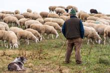Sheperd With His Flock