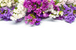 Beautiful violet , pink and white flowers isolated on white background