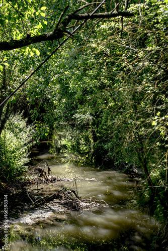 Bach fließt durch einen Märchenwald