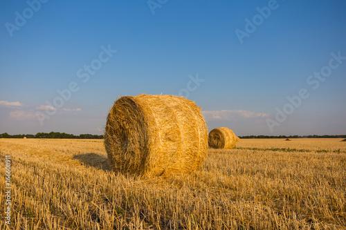 Keuken foto achterwand Rood traf. summer wheat field after a harvest