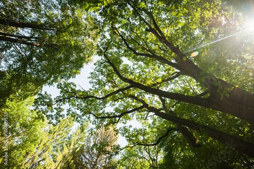 oak forest #166609533