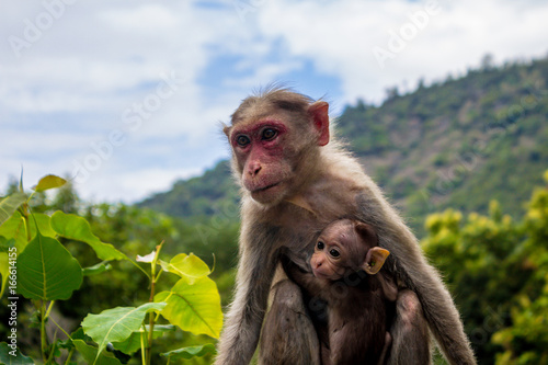 In de dag A monkey and its baby
