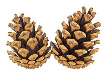 Two Pine Cones Isolated On A White Background