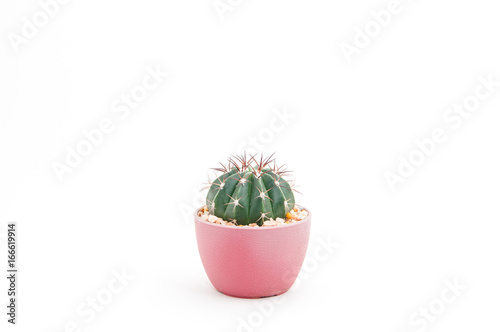 Foto op Canvas Cactus Cactus in the pot isolated on white background.