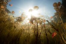 Bright Sunshine And Freshwater Lake
