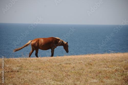 Fototapety, obrazy: Horses on the field near the sea