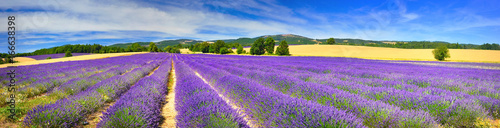 Poster Panoramafoto s Panorama of lavender field