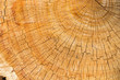 canvas print picture - cut of bark with annual rings of year as background or  texture