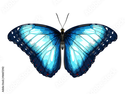Valokuva  Single detailed Blue Butterfly morpho on a white background.