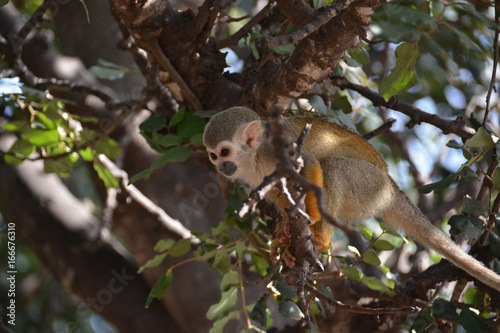 Photo Cute little monkey climbing