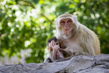 Image Of Mother Monkey And Baby Monkey On Nature Background. Wild Animals.