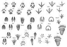 Animal Footprint Collection Il...