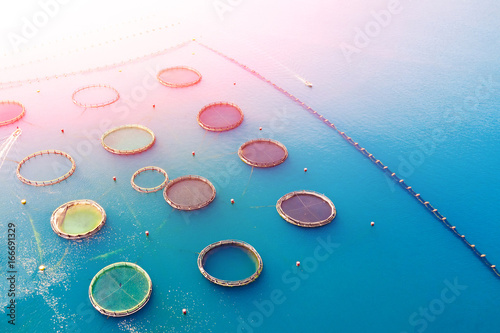 Fish farm in the sunlight, aerial photography