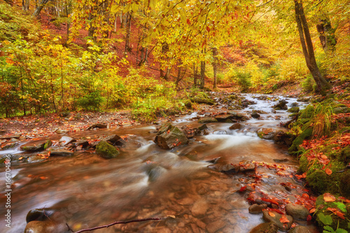 Fototapety, obrazy: rapid mountain river in autumn.