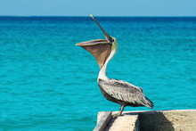 Pelican Stands On A Pier With A Beautiful Exotic Blue Sea. A Tropical Serene Pier Scene With The Caribbean Sea.